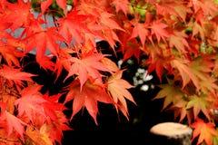 Jesieni ulistnienie Fotografia Stock