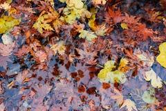 Jesieni ulistnienie fotografia royalty free