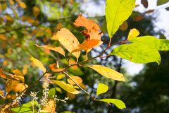 Jesieni ulistnienie aglow z światłem słonecznym Zdjęcie Stock
