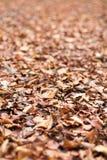 Jesieni ulistnienie Jesień liście Zdjęcia Stock
