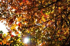 Jesieni ulistnienie na słonecznym dniu Obrazy Royalty Free
