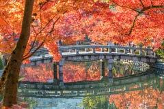 Jesieni ulistnienie przy kamiennym mostem w Eikando świątyni Obrazy Stock