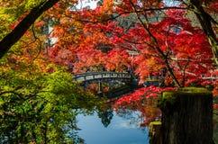Jesieni ulistnienie przy kamiennym mostem w Kyoto, Japonia Zdjęcie Stock