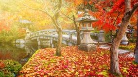 jesieni ulistnienie przy zmierzchem w Eikando, Kyoto Zdjęcia Royalty Free