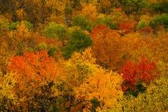 Jesieni ulistnienie W Adirondack górach stan nowy jork Obraz Royalty Free