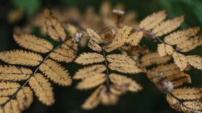 Jesieni ulistnienie w mieście w naturze Kolorów żółtych liście w parku Zakończenie piękny ulistnienie Obraz Stock