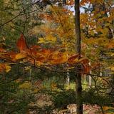Jesieni ulistnienie w Minnewaska stanu parka prezerwie w Nowy Jork obrazy royalty free
