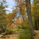 Jesieni ulistnienie w Minnewaska stanu parka prezerwie w Nowy Jork zdjęcia stock