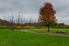 Jesieni ulistnienie w Muskoka Fotografia Royalty Free