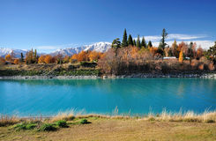 Jesieni ulistnienie w Nowa Zelandia, Jeziorny Tekapo Zdjęcia Stock
