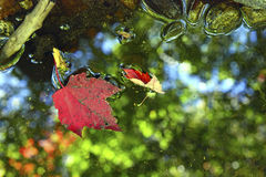 Jesieni ulistnienie w północnego wschodu lesie Fotografia Royalty Free