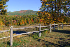 Jesieni ulistnienie w północnego wschodu lesie Zdjęcia Stock