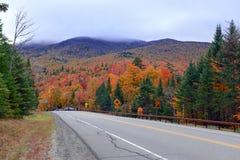 Jesieni ulistnienie w północnego wschodu lesie Zdjęcie Royalty Free