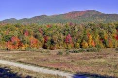 Jesieni ulistnienie w północnego wschodu lesie Obraz Royalty Free