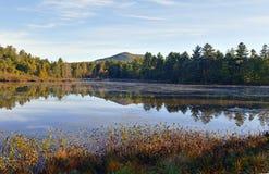 Jesieni ulistnienie w północnego wschodu lesie Zdjęcia Royalty Free