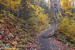 Jesieni ulistnienie w północnego wschodu lesie Obrazy Stock
