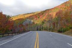 Jesieni ulistnienie w północnego wschodu lesie Fotografia Stock