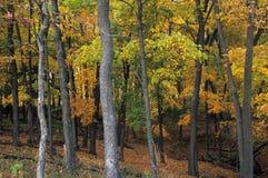 Jesieni ulistnienie w wizerunku kopa Krajowym zabytku, Iowa Zdjęcia Stock