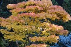 Jesieni ulistnienie W Zen ogródzie Obrazy Stock