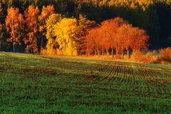 Jesieni łuna Zdjęcie Stock