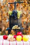Jesieni uprawy Zdjęcia Royalty Free