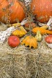 Jesieni uprawy Zdjęcie Royalty Free