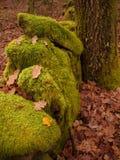 Jesieni uprawy scena z drzewem i skałami Zdjęcie Royalty Free
