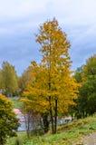 Jesieni wapna drzewo na górze wzgórza Fotografia Royalty Free