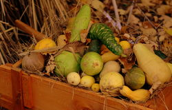 Jesieni warzywa Obrazy Royalty Free