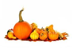 Jesieni warzywa Zdjęcie Royalty Free
