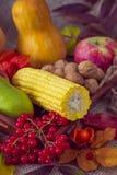 Jesieni warzywa, jagody i owoc, Sezonowy jesieni jedzenie - pu zdjęcie royalty free