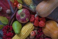 Jesieni warzywa, jagody i owoc, Sezonowy jesieni jedzenie - pu fotografia royalty free