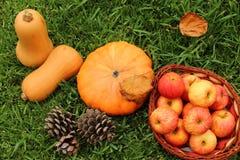 Jesieni warzywa na gazonie zdjęcie stock