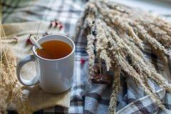 Jesieni wciąż życia skład z filiżanką herbata Zdjęcia Royalty Free