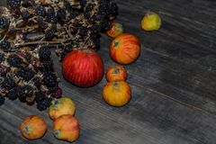 Jesieni wciąż życie 22 Zdjęcie Royalty Free