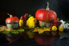 Jesieni wciąż życie z baniami, chryzantemy i kolorów żółtych liście klonowi na ciemnym tle z, lustrzanym odbiciem i wodą opuszcza Obraz Royalty Free