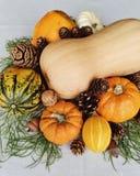 Jesieni wciąż życie z butternut kabaczkiem, małymi baniami i sosna rożkami, zdjęcia stock