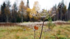 Jesieni więdnąć Fotografia Royalty Free