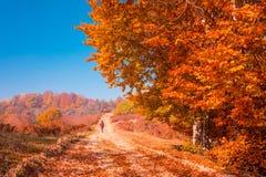 Jesieni wiejska droga Zdjęcia Stock