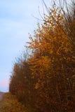 Jesieni wiejska droga Zdjęcie Stock