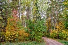 Jesieni wiejska droga i las Fotografia Royalty Free