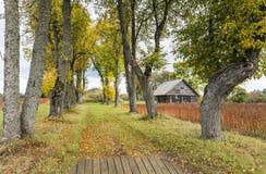 Jesieni wiejska droga, Latvia Obrazy Stock