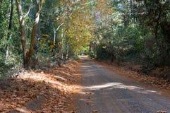 Jesieni wiejska droga, podjazd w Australijskim odludziu Zdjęcia Stock