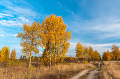 Jesieni wiejska droga wśród drzew w polu Obraz Royalty Free