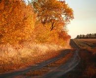 Jesieni wiejska droga wzdłuż lasu, Obraz Stock