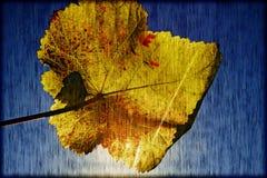 Jesieni wina liść Zdjęcia Royalty Free