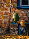 Jesieni wioski podwórze Bania, żółty ulistnienie i stara miotła na tle ceglany dom, obrazy stock