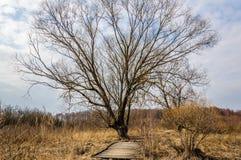 jesieni wiosny krajobraz drzewo bez liści blisko starego drewnianego footpath w grązie fotografia royalty free