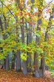 Jesieni wrażenie od Saxony lasu blisko Hamburg, Niemcy Zdjęcie Royalty Free