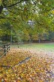 Jesieni wrażenie od Saxony lasu blisko Hamburg, Niemcy Obrazy Royalty Free